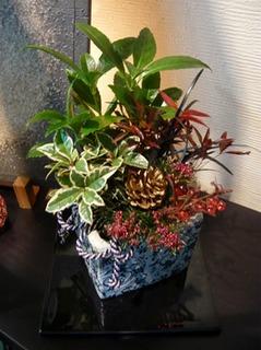 お正月の寄せ植え、Jプランツが人気