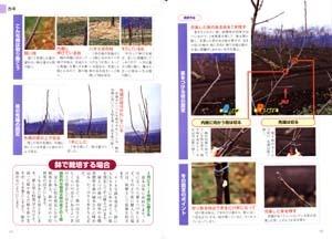 果樹栽培 剪定方法が写真と図でよくわかる