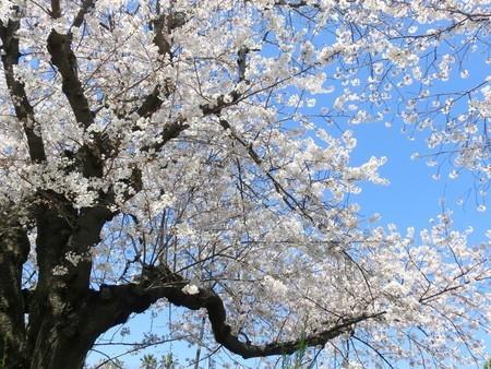 kakura.jpg