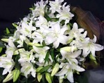 カサブランカの花を切り花に