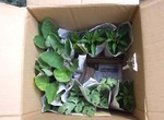 夏野菜の苗を通販で購入♪