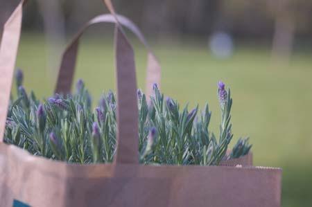 lavender (8).jpg