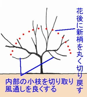 mimoza-sente.jpg