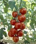 夏野菜の梅雨対策・育て方