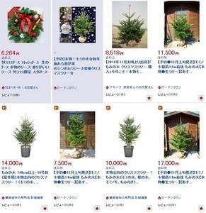 モミの木 鉢植えの育て方