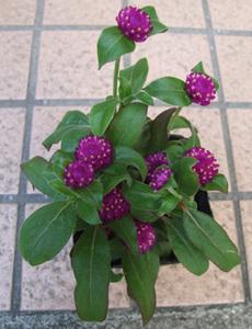 花の名前を教えてください