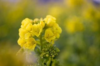 3月の家庭菜園作業 タネまきと収穫の季節に