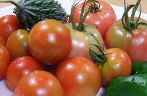 夏野菜 種類