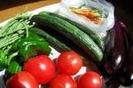 夏野菜の苗を通販で