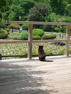 猫よけ猫退治の方法|前編