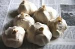 無臭ニンニク(にんにく)の育て方、栽培方法