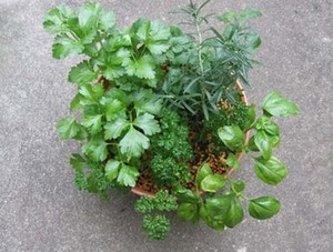 parsley (6).jpg