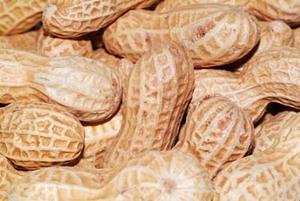 peanut (1).jpg