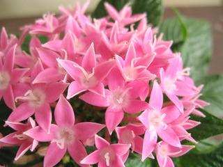 夏の暑さに強い花