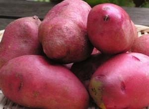 ジャガイモの種類と特徴 画像2