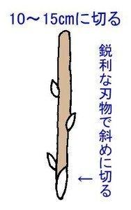 sasikiB-thumbnail2.jpg