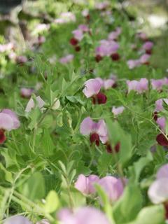 4月の家庭菜園作業 栽培準備と植え付け