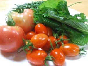 ベランダで簡単野菜栽培|春まき編