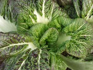 高菜のレシピ
