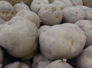 ジャガイモ プランター栽培で大きく育てるコツ