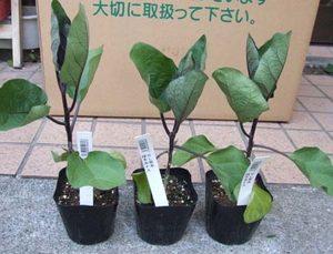 野菜苗 販売店紹介