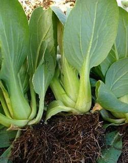 11月の家庭菜園作業 収穫と植え付け、計画的に栽培