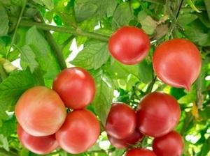 5月の家庭菜園作業 夏野菜と葉物の栽培
