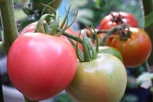 2月の家庭菜園作業 早まき野菜と夏野菜の準備