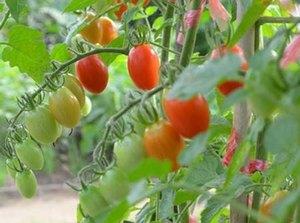 野菜 支柱の立て方