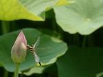 植物の梅雨対策