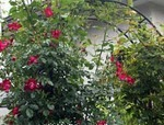 園芸・ガーデニング|用語集|や行