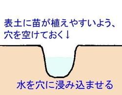 ueana.jpg