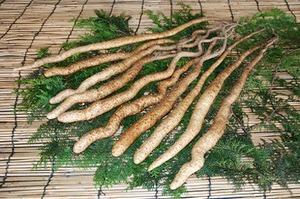 ヤマイモの育て方|パイプ栽培で収穫が楽に!