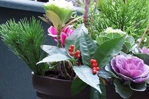 正月の寄せ植え|クリスマス用をリメーク