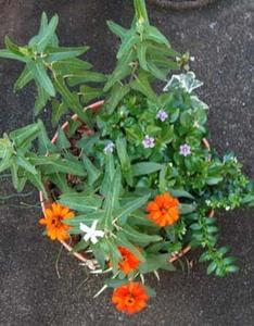 秋の寄せ植えを作りました
