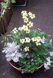 寄せ植えの基本とコツ|春夏秋冬を通じて楽しむポイント