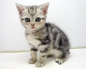 種類 人気 猫