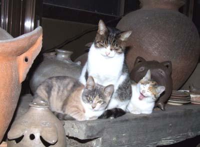 cat (1).jpg