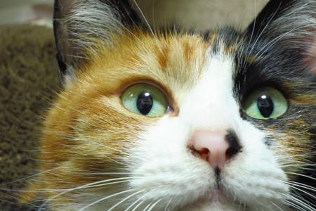 cat (3).jpg