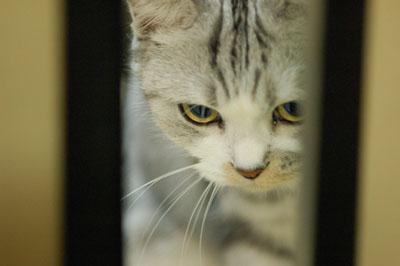 cat (5).jpg