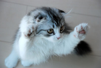 cat (6).jpg