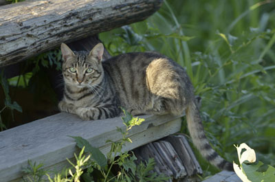 cat (7).jpg