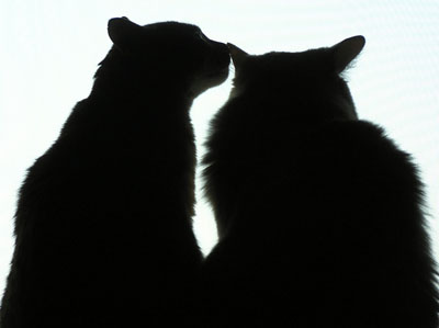 cat (8).jpg