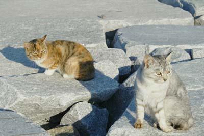 cats (5).jpg