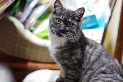 cats (8).jpg