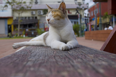 love cat.jpg