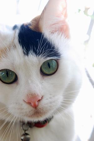 love cat (1).jpg