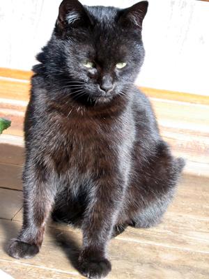 lovecats (9).jpg